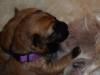 pups-1-week-1