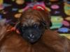 pups-1-week-12