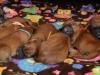 pups-1-week-13